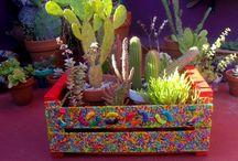 Cactus sucu