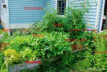 Small Space Garden / Share ideas and #inspiration for small space gardens, urban gardens or backyard gardens!