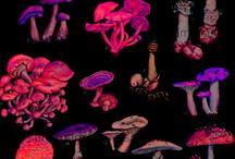 flora / fauna / by Heaven's Night