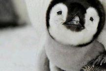 Something to make me smile