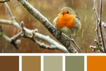 Advanced Colour
