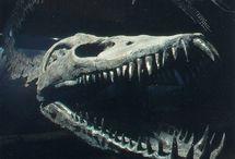 Dinosauri  scheletriti