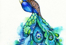 ∞ Peacock ∞ / by Miss Ginger