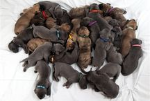 Puppies, Puppies, Puppies! / by Middendorf Animal Hospital