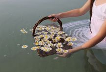 flores/agua/naturaleza/vida