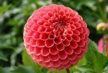 Beautiful flower / flowers