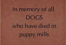 In Memory Of All Dogs Who Died In Puppy Mills / Puppy Mills...nothing but torture and a true living hell for these poor innocent animals. We need to get together and raise awareness and somehow ban all Puppy Mills one by one. / by Elena Swinney