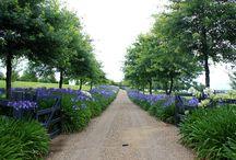 Garden vic park / Garden