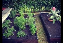Health & Garden  / Ideas, healthyfood, lets be creative!