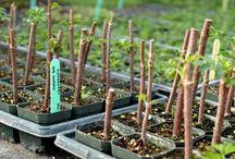 zahrada pěstování