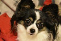 Reika, my baby dog ♥
