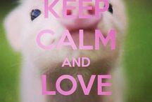 Piggy s