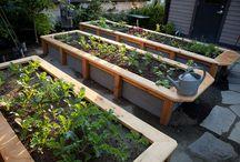 Hardscape: Vegetable Beds