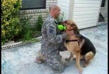 Dogs and the Military / Videos and stories of dogs and soldiers / by Seattle DogSpot
