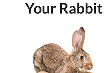 Cream bunny
