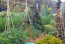 Permaculture 4 the suburbs / Is it possible to create a garden using permaculture concepts with only a tiny piece of land?