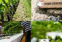 Wein-Landschaften / EIndrucksvolle Eindrücke der durch die Weinkultur geprägten Landschaft.