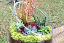 jardim - Suculentas