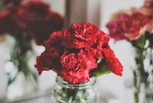Beautiful Carnations / We are real, pure, and strong women as Alpha Chi's, just like our flower the beautiful scarlet carnation <3