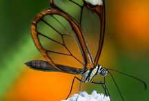 Macro en natuurfotografie