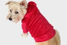 Things to Wear for Pets