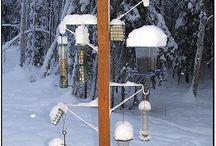 Bird Feeder sanctuary and feeders