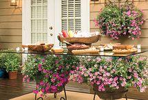 Garden & Plant Ideas