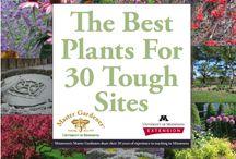 Grow garden grow / Gardening, planting, flowers, herbs, vegetables.