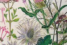 Bloemen prints