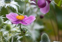 fiori da ricamare