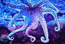 Under the Sea / Sea life / by Carmela Romano