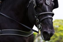 Horses / by Megan Clark