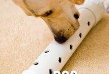 Dog Toys / DIY toys for your 4-legged mate