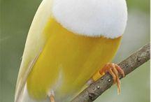 Birdds  Beau