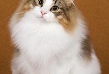 favorite cat pictures / by Katie Isner