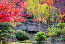 Le bellezze del Giappone!!!!