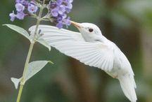 Humming birds / by Deb Rutto