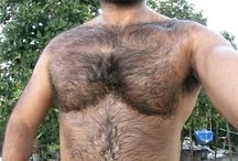 Gay Bears / All about hot sexy hairy bears.....we pin hot bears, simples :)