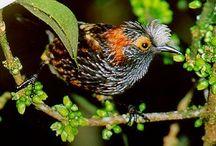 endangered Hawaii species