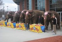 Ringling Brothers Elephant Brunch...