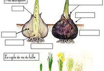 sciences les végétaux
