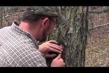 Bushcraft Videos