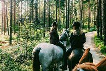 Horsy horses