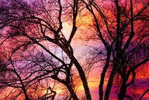 Photography (nature) / Nature