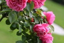FLOWERS, GARDENS & MUSHROOMS