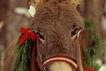 Donkeys / by Carol Leighton