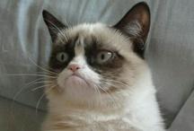 Grumpy Cat / ... No