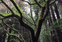 The Forest of Nisene Marks State Park / by CA State Parks