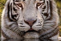 Animals / by Jennifer Cotoraci