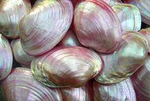 i love : shells